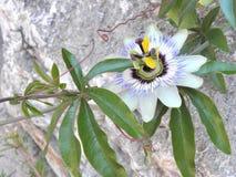 克罗地亚人flora1 免版税库存照片