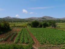 克罗地亚农业风景  免版税库存照片