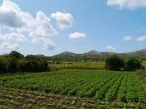 克罗地亚农业风景  免版税库存图片