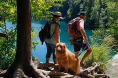 克罗地亚的主要自然吸引力是有瀑布小瀑布的Plitvice湖  鲜绿色清楚的凉水和游人有a的 图库摄影