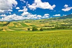 克罗地亚的纯绿色本质 库存图片