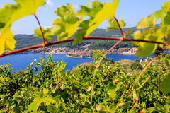 克罗地亚,海岛Korcula 免版税库存照片
