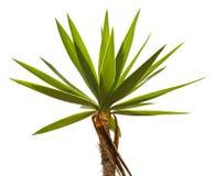克罗恩的热带棕榈树 免版税图库摄影