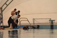 克罗托内意大利4月2014年在训练期间的Freedivers在水池 库存照片