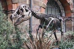 克莱尔, T雷克斯的雕塑,在地球科学前面Sedgwick博物馆,剑桥,英国 免版税库存图片