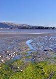 克赖斯特切奇出海口&鸟类保护区全景 免版税库存照片
