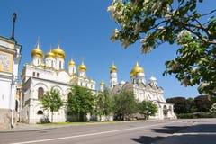 克里姆林宫Arkhangelsky和Blagoveshchensky大教堂在春天,俄罗斯 图库摄影