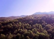2008克里米亚半岛山松夏天 免版税库存图片