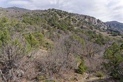 克里米亚半岛山的森林在春天 库存图片