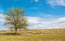 克里米亚半岛干草原 库存照片