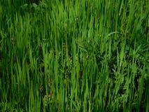 克里米亚半岛草本在春天 库存图片