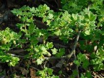 克里米亚半岛草本在春天 库存照片