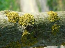 克里米亚半岛草本在春天 免版税图库摄影