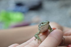 克里米亚半岛野生生物 库存图片