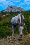 克里米亚半岛风景- Fox海湾Echki Dag山 免版税库存照片