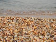克里米亚壳海滩  库存照片