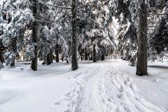 克里米亚夜间高涨纵向发出光线星期日乌克兰冬天 库存照片