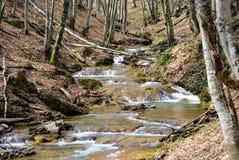克里米亚瀑布的森林 库存图片