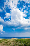 克里米亚葡萄园 免版税库存照片