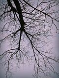 克什米尔的自然秀丽 库存照片
