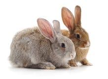 兔子二个年轻人 库存照片