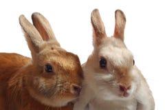 兔子二 库存图片