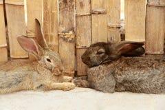 兔子二 库存照片