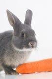 兔子兔子 图库摄影
