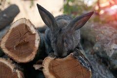 兔子兔宝宝在庭院里 库存图片