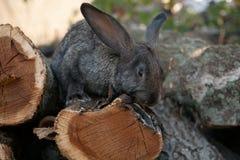 兔子兔宝宝在庭院里 免版税库存照片