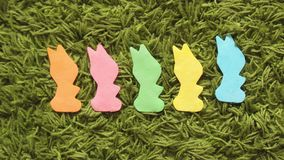 兔子兔宝宝或野兔计数学会停止运动 影视素材