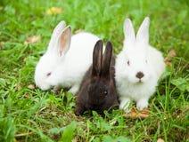 兔子兔宝宝逗人喜爱在草 免版税库存照片