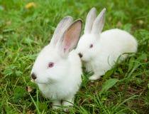 兔子兔宝宝逗人喜爱在草 免版税库存图片