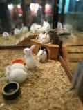 兔子兔宝宝 免版税库存照片