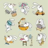 兔子印度桃花心木 库存图片