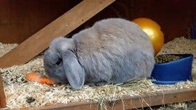 兔子吃 图库摄影