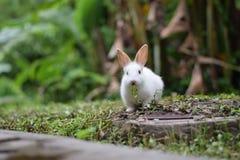 兔子吃 库存图片
