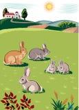 兔子和兔宝宝 库存图片
