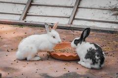 兔子和食物 图库摄影