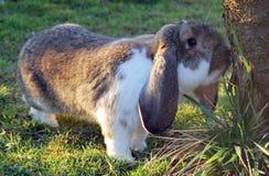 兔子嗅结构树 免版税图库摄影