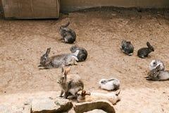 兔子在动物园里 库存照片