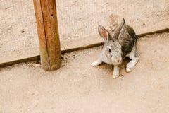 兔子在动物园里 免版税库存照片