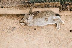 兔子在动物园里 免版税库存图片