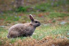 兔子在城市公园 免版税库存图片