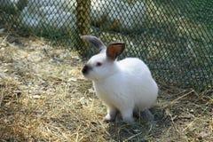 兔子在小牧场 图库摄影