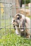 兔子在庭院里 免版税库存照片
