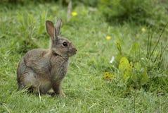 兔子在森林 库存照片
