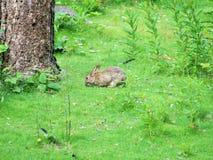 兔子在森林在中心停放诺丁汉英国 库存图片