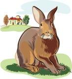 兔子在草甸 免版税库存图片