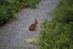 兔子坐石渣道路 库存照片